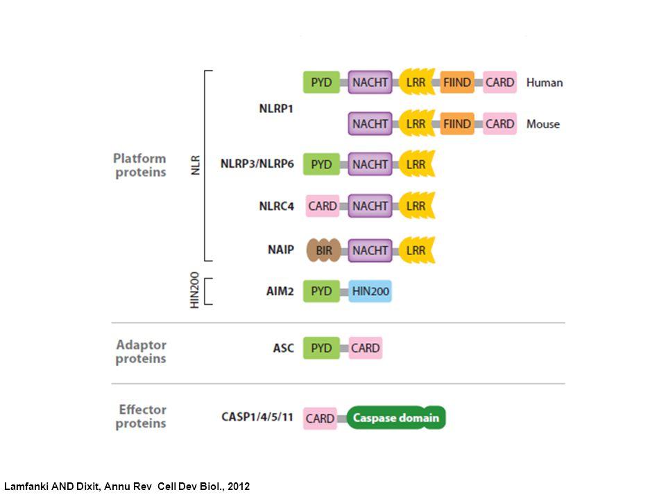 Lamfanki AND Dixit, Annu Rev Cell Dev Biol., 2012