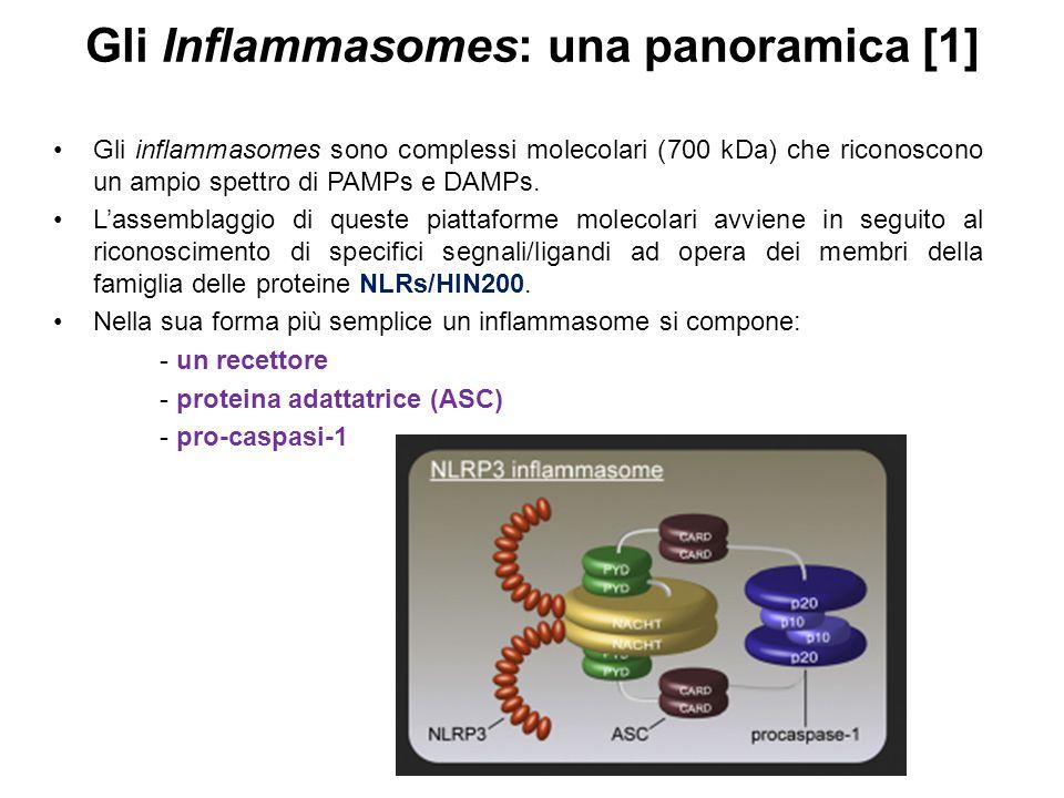 Gli Inflammasomes: una panoramica [1] Gli inflammasomes sono complessi molecolari (700 kDa) che riconoscono un ampio spettro di PAMPs e DAMPs. L'assem