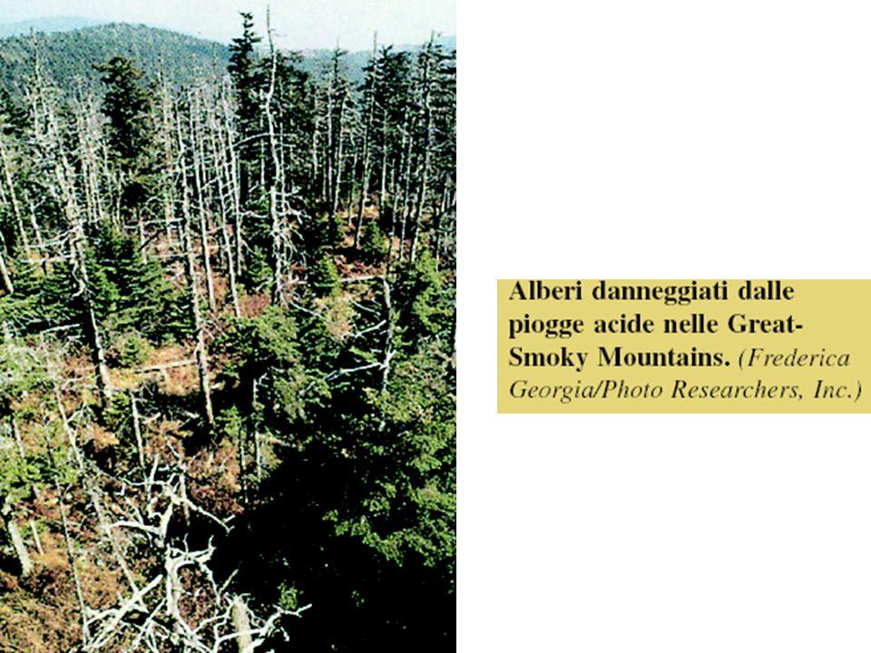 Figura B: alberi danneggiati dalle piogge acide