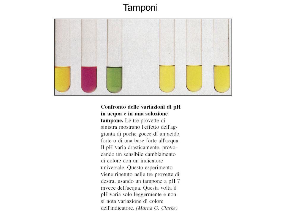 Confronto delle variazioni di pH in acqua e in una soluzione tampone Tamponi