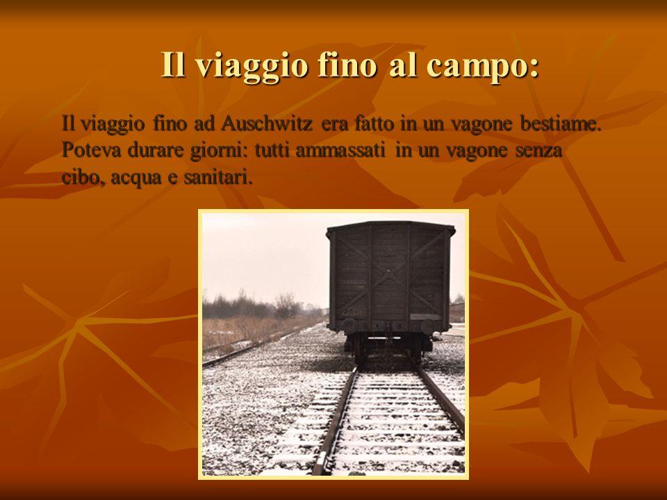 Il viaggio fino al campo: Il viaggio fino ad Auschwitz era fatto in un vagone bestiame. Poteva durare giorni: tutti ammassati in un vagone senza cibo,