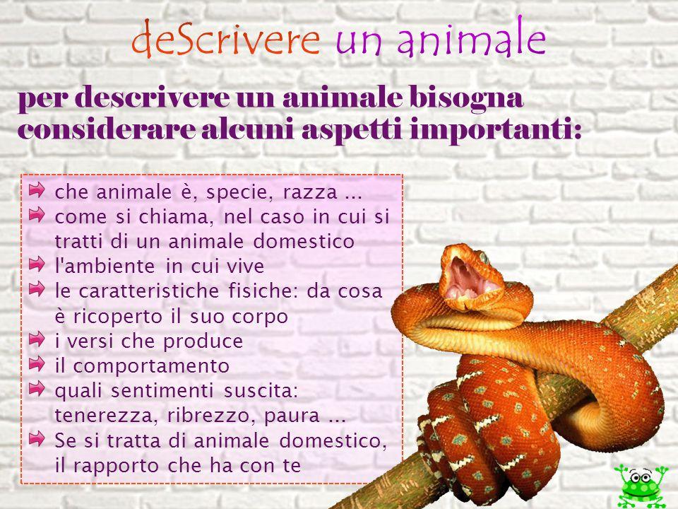 per descrivere un animale bisogna considerare alcuni aspetti importanti: che animale è, specie, razza... come si chiama, nel caso in cui si tratti di
