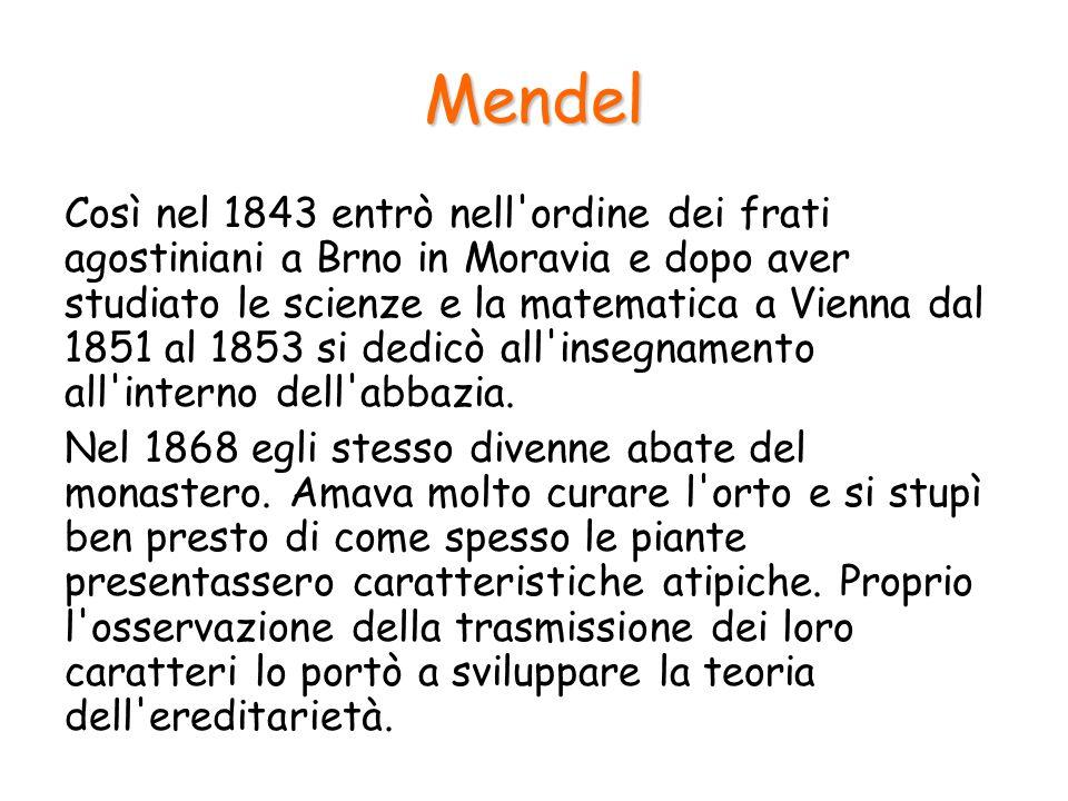 Mendel Mendel compì i suoi primi esperimenti utilizzando la comune pianta di pisello: mise a punto delle prove per individuare in quale modo i caratteri vengono trasmessi da una generazione all'altra studiando diverse caratteristiche della pianta.