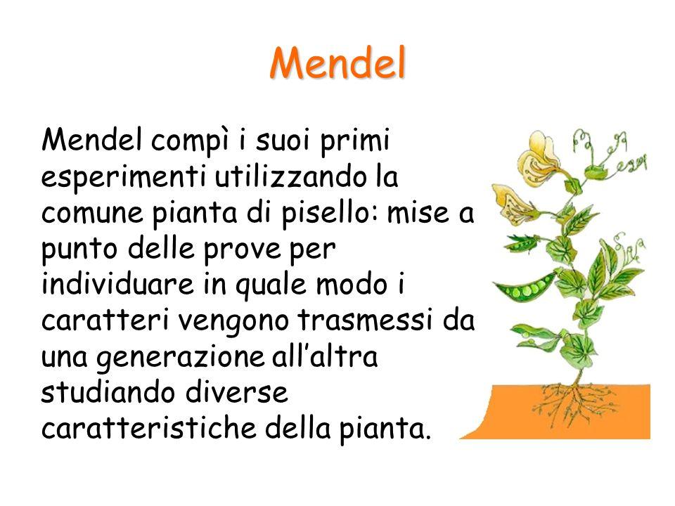 La trasmissione di un solo carattere Gli studi che Mendel effettuò vennero alla luce soltanto diversi anni dopo la sua morte e costituirono la base di una nuova scienza: la genetica.