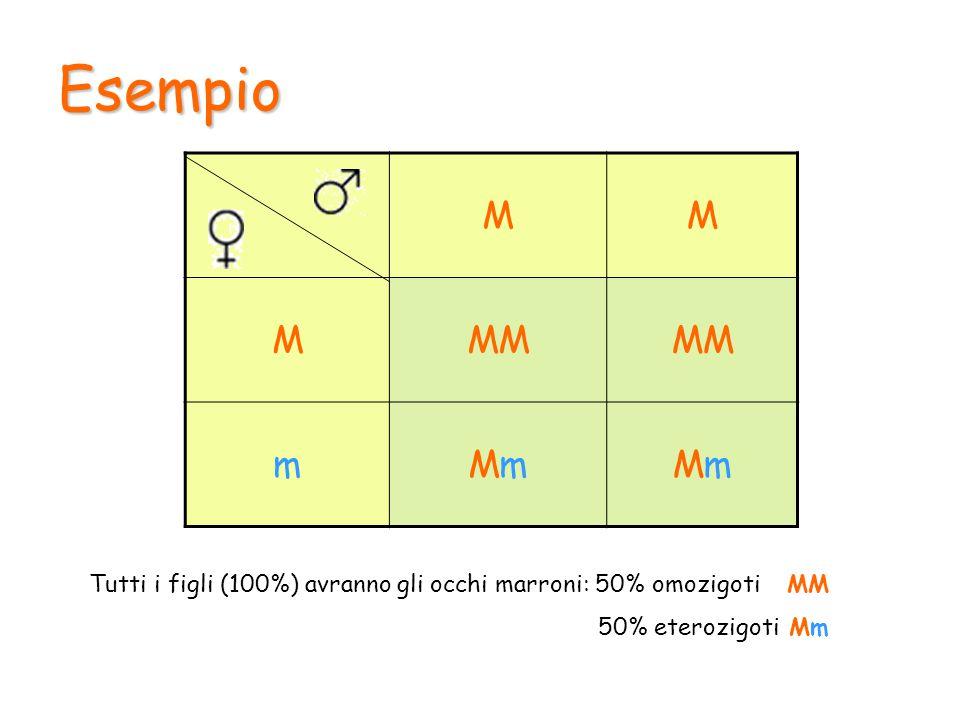 Alleli multipli In generale a determinare un carattere in un organismo intervengono solo due alleli.