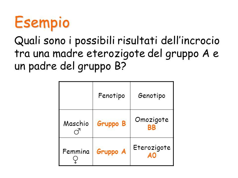 Esempio BB AAB 0B0 I figli saranno: 50% del gruppo AB 50% del gruppo B (eterozigoti)