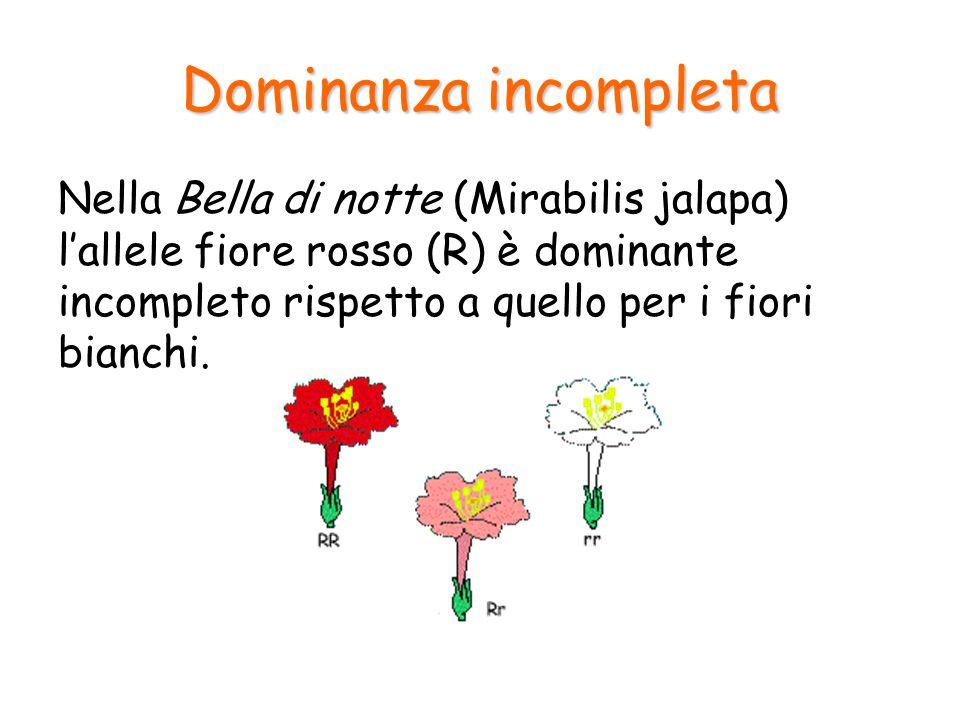 Dominanza incompleta Fenotipo Genotipo omozigoteeterozigote Fiore rossoRR Fiore biancorr Fiore rosaRr