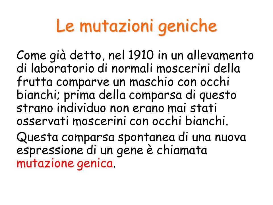 Le mutazioni geniche L'individuo mutante discende sempre da genitori normali e la sua nuova caratteristica si trasmette ai suoi discendenti.