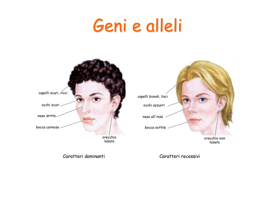 Nei cromosomi si trovano quindi tutte le informazioni ereditarie che permettono la costruzione dell'individuo.