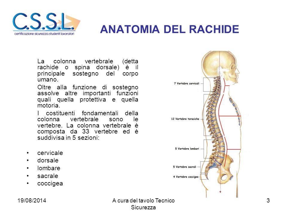 ANATOMIA DEL RACHIDE La colonna vertebrale (detta rachide o spina dorsale) è il principale sostegno del corpo umano. Oltre alla funzione di sostegno a