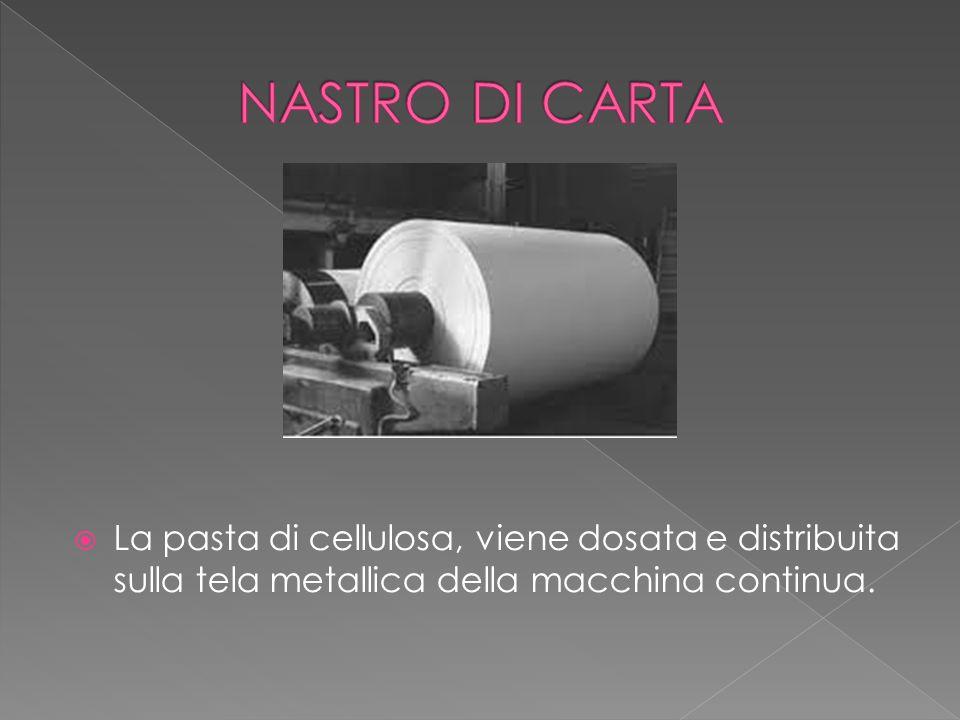  La pasta di cellulosa, viene dosata e distribuita sulla tela metallica della macchina continua.