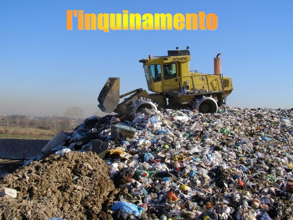 Uno tra i gravi problemi causati dalla precedente raccolta indifferenziata è l'inquinamento: ogni anno milioni di animali marini, pesci e soprattutto tartarughe muoiono perché scambiano i nostri rifiuti (buste di plastica etc…)per cibo.
