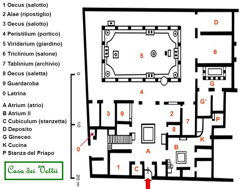 A Atrium (atrio) 2 Alae (ripostiglio) 3 Oecus (salotto) 4 Peristilium (portico) 5 Viridarium (giardino) 6 Triclinium (salone) 7 Tablinium (archivio) Casa dei Vettii 8 Oecus (saletta) A 8 23 4 6 5 B 1 Oecus (salotto) 1 K K Cucina P C C Cubiculum (stanzetta) 7 B Atrium II G P Stanza del Priapo 9 Guardaroba 9 D D Deposito G Gineceo G' 0 0 Latrina