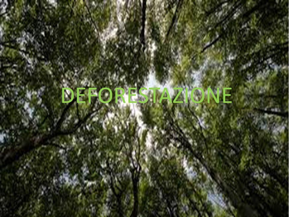 LA DEFORESTAZIONE La deforestazione avviene a causa dell'uomo.