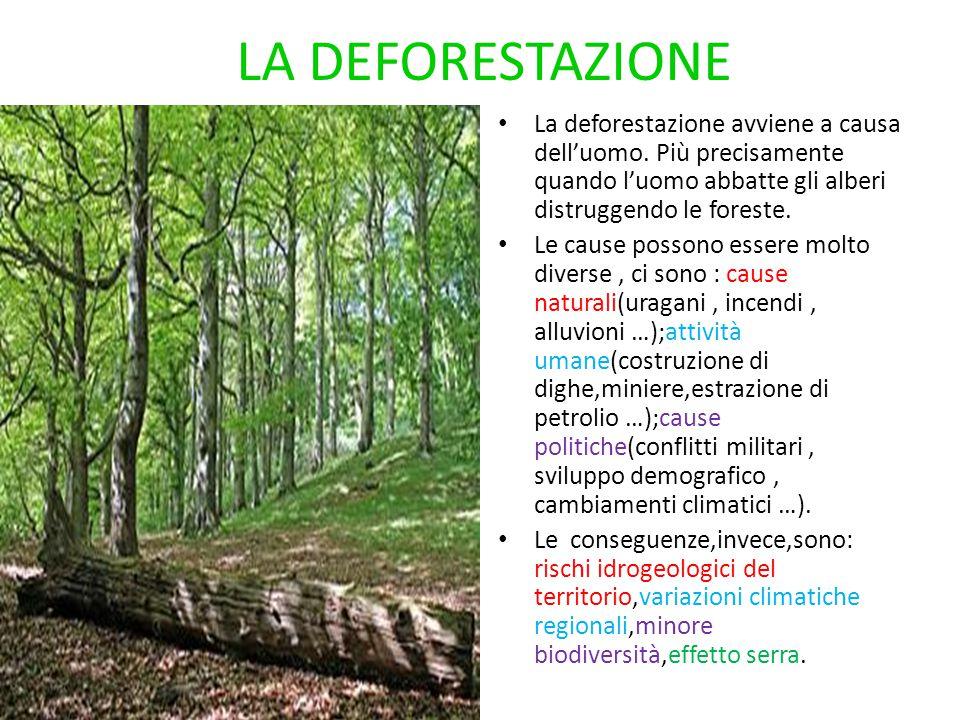 LA DEFORESTAZIONE La deforestazione avviene a causa dell'uomo. Più precisamente quando l'uomo abbatte gli alberi distruggendo le foreste. Le cause pos