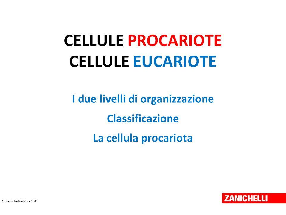 © Zanichelli editore 2013 CELLULE PROCARIOTE CELLULE EUCARIOTE I due livelli di organizzazione Classificazione La cellula procariota