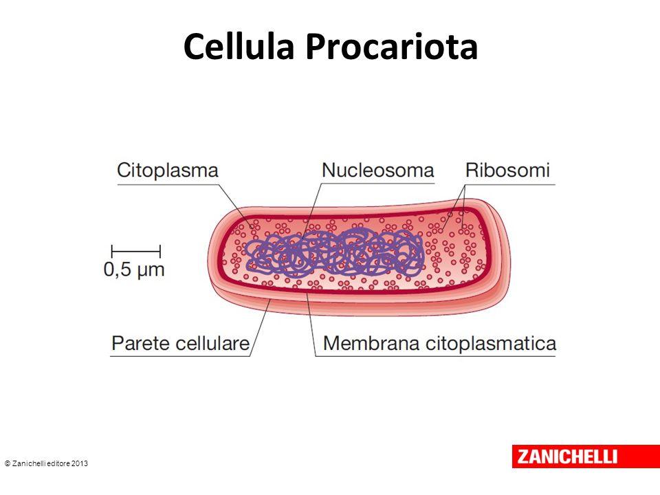© Zanichelli editore 2013 Cellula Procariota