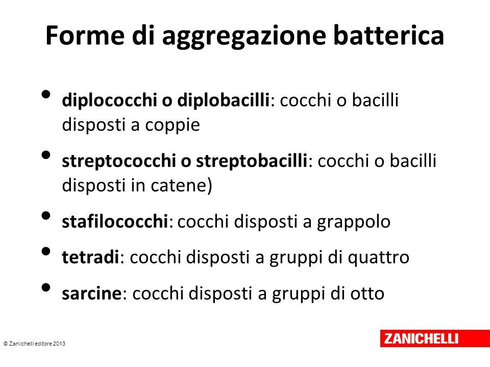 © Zanichelli editore 2013 Forme di aggregazione batterica diplococchi o diplobacilli: cocchi o bacilli disposti a coppie streptococchi o streptobacill