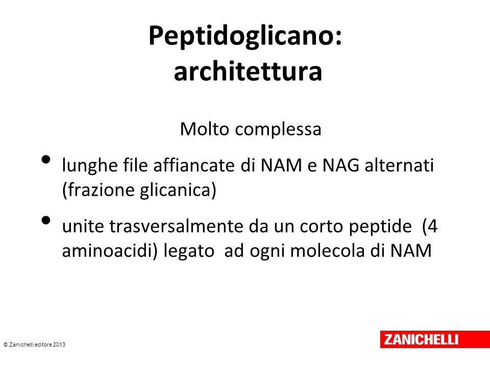 © Zanichelli editore 2013 Peptidoglicano: architettura Molto complessa lunghe file affiancate di NAM e NAG alternati (frazione glicanica) unite trasve