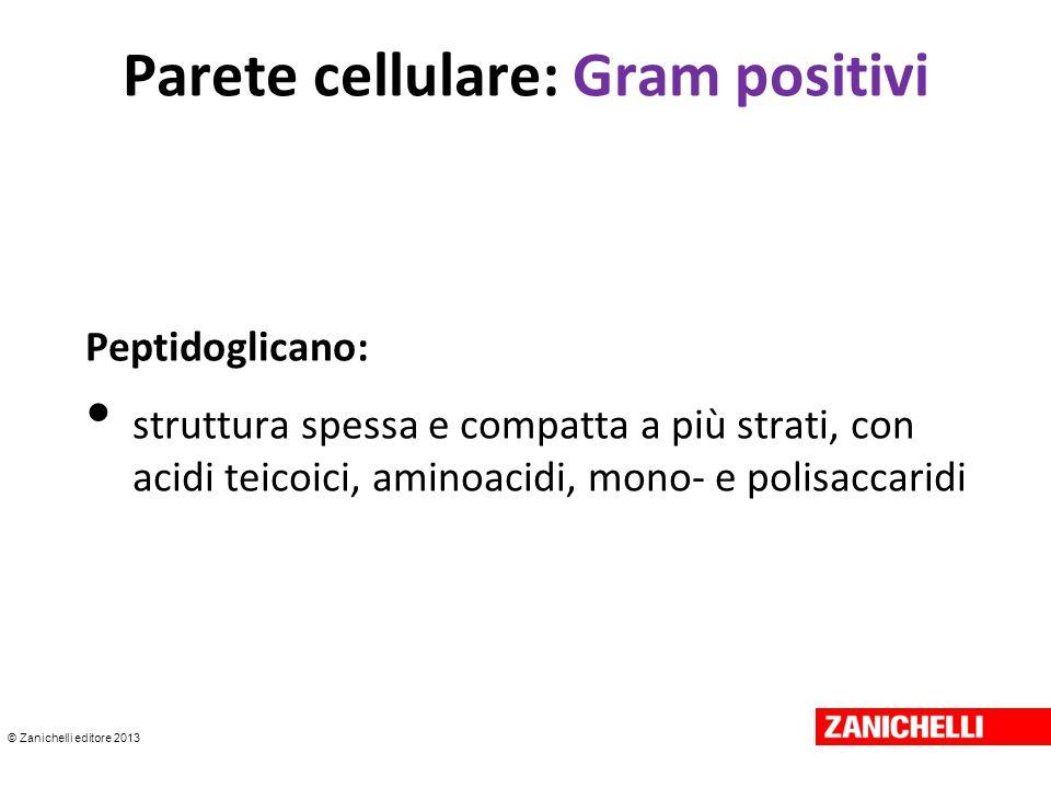 © Zanichelli editore 2013 Parete cellulare: Gram positivi Peptidoglicano: struttura spessa e compatta a più strati, con acidi teicoici, aminoacidi, mo