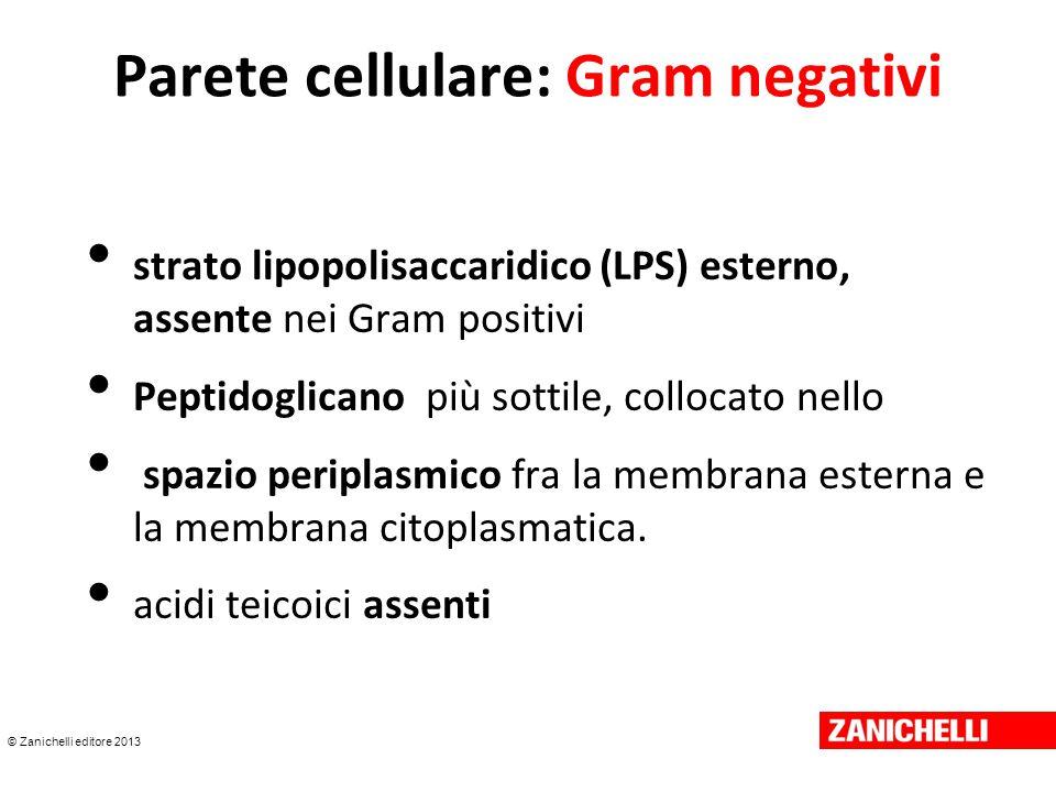 © Zanichelli editore 2013 Parete cellulare: Gram negativi strato lipopolisaccaridico (LPS) esterno, assente nei Gram positivi Peptidoglicano più sotti