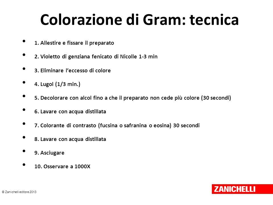 © Zanichelli editore 2013 Colorazione di Gram: tecnica 1. Allestire e fissare il preparato 2. Violetto di genziana fenicato di Nicolle 1-3 min 3. Elim