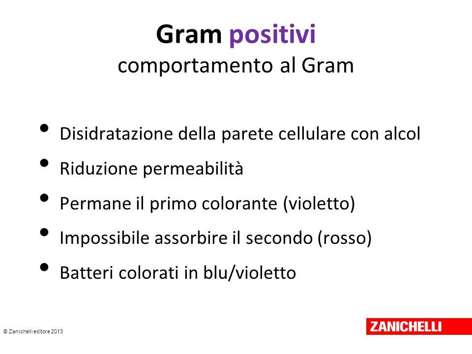 © Zanichelli editore 2013 Gram positivi comportamento al Gram Disidratazione della parete cellulare con alcol Riduzione permeabilità Permane il primo