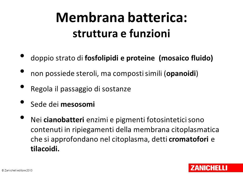 © Zanichelli editore 2013 Membrana batterica: struttura e funzioni doppio strato di fosfolipidi e proteine (mosaico fluido) non possiede steroli, ma c