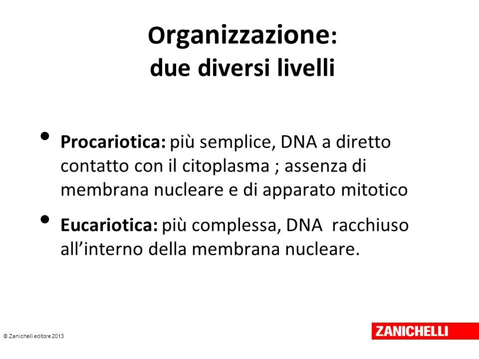 © Zanichelli editore 2013 O rganizzazione : due diversi livelli Procariotica: più semplice, DNA a diretto contatto con il citoplasma ; assenza di memb