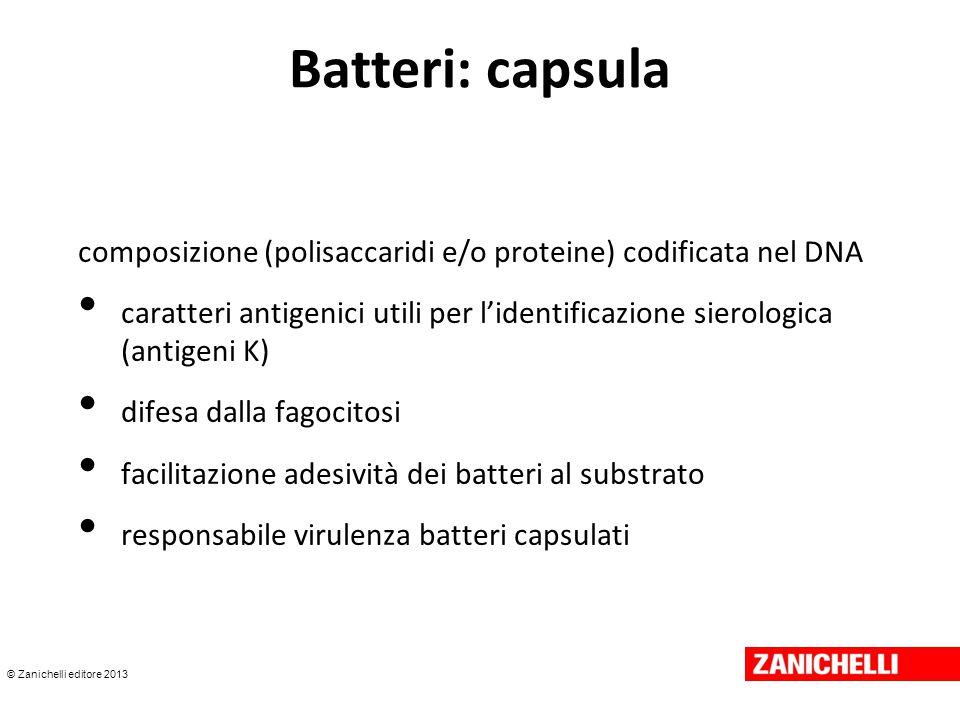 © Zanichelli editore 2013 Batteri: capsula composizione (polisaccaridi e/o proteine) codificata nel DNA caratteri antigenici utili per l'identificazio