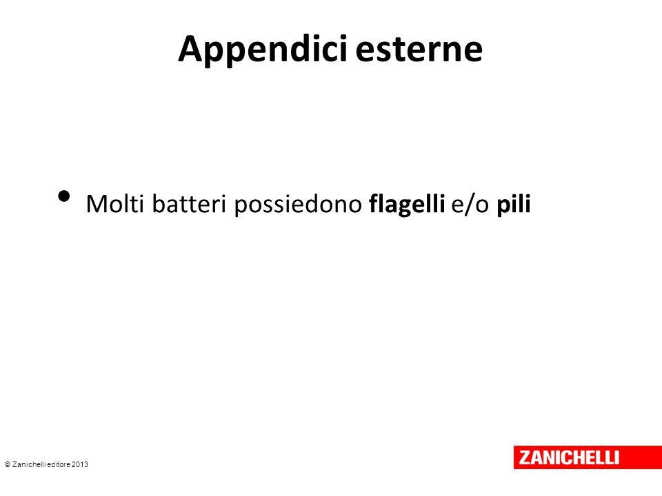 © Zanichelli editore 2013 Appendici esterne Molti batteri possiedono flagelli e/o pili