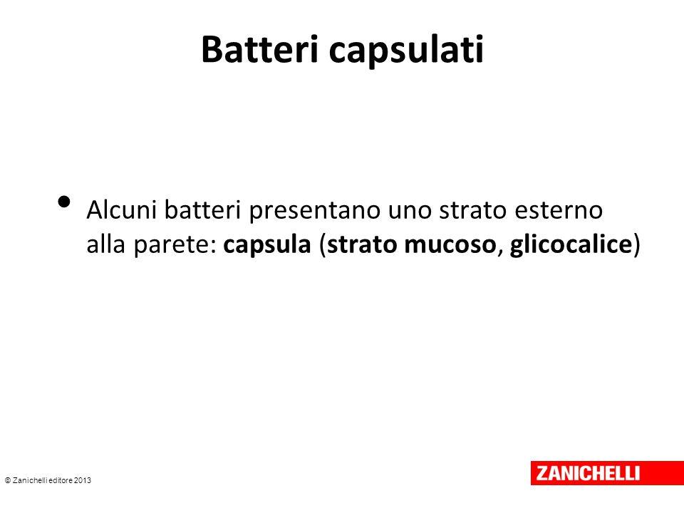 © Zanichelli editore 2013 Batteri capsulati Alcuni batteri presentano uno strato esterno alla parete: capsula (strato mucoso, glicocalice)