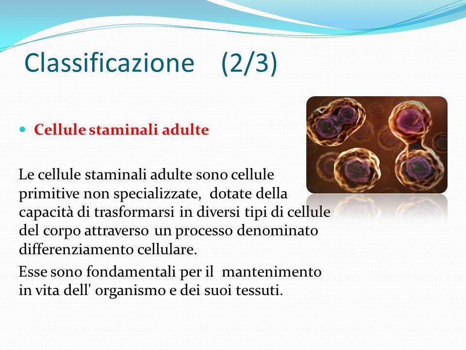 Cellule staminali adulte Le cellule staminali adulte sono cellule primitive non specializzate, dotate della capacità di trasformarsi in diversi tipi di cellule del corpo attraverso un processo denominato differenziamento cellulare.