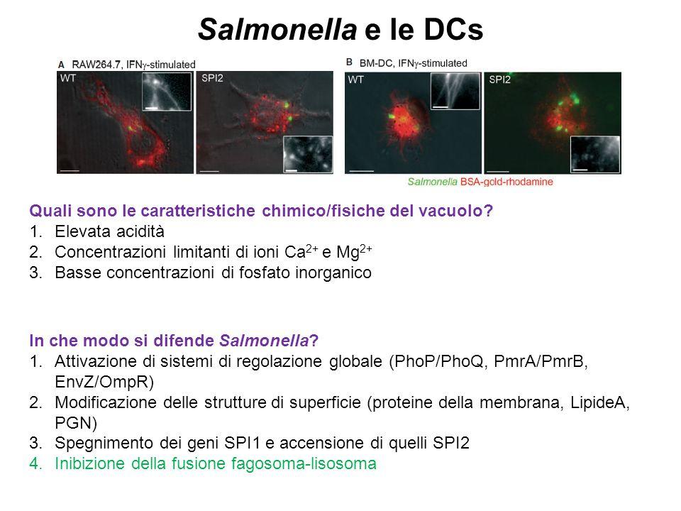 Salmonella e le DCs Quali sono le caratteristiche chimico/fisiche del vacuolo? 1.Elevata acidità 2.Concentrazioni limitanti di ioni Ca 2+ e Mg 2+ 3.Ba