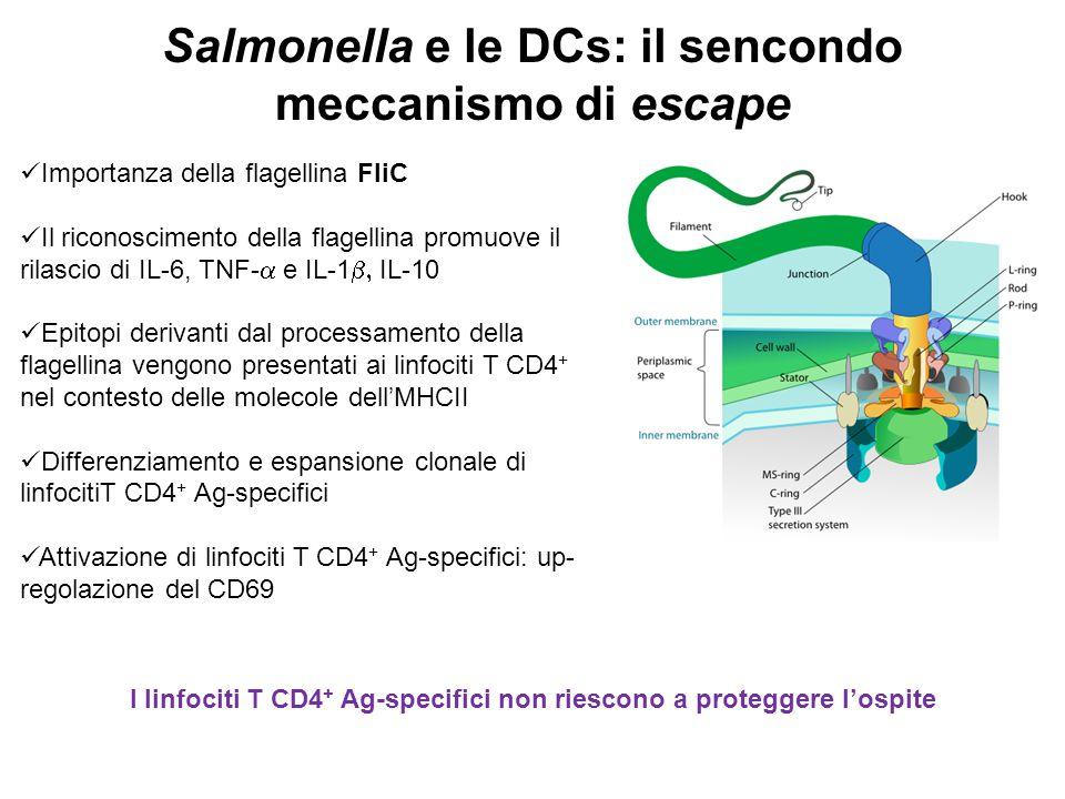 Salmonella e le DCs: il sencondo meccanismo di escape Importanza della flagellina FliC Il riconoscimento della flagellina promuove il rilascio di IL-6