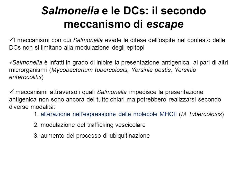 Salmonella e le DCs: il secondo meccanismo di escape I meccanismi con cui Salmonella evade le difese dell'ospite nel contesto delle DCs non si limitan