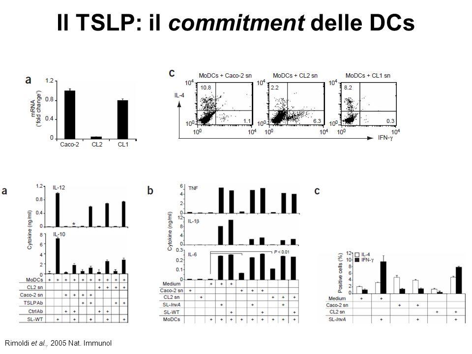 Il TSLP: il commitment delle DCs Rimoldi et al., 2005 Nat. Immunol