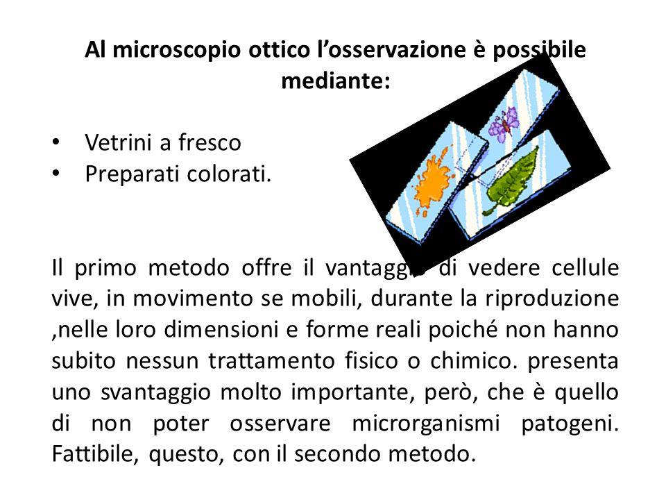 Al microscopio ottico l'osservazione è possibile mediante: Vetrini a fresco Preparati colorati.