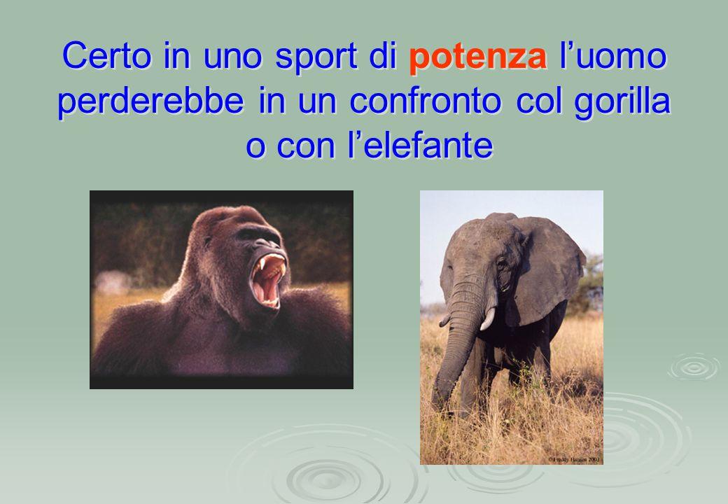 Certo in uno sport di potenza l'uomo perderebbe in un confronto col gorilla o con l'elefante Certo in uno sport di potenza l'uomo perderebbe in un confronto col gorilla o con l'elefante