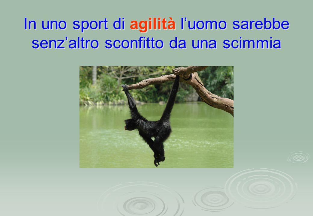 In uno sport di agilità l'uomo sarebbe senz'altro sconfitto da una scimmia In uno sport di agilità l'uomo sarebbe senz'altro sconfitto da una scimmia