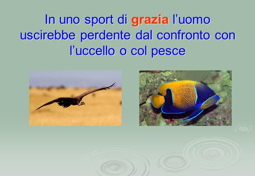 In uno sport di grazia l'uomo uscirebbe perdente dal confronto con l'uccello o col pesce In uno sport di grazia l'uomo uscirebbe perdente dal confront