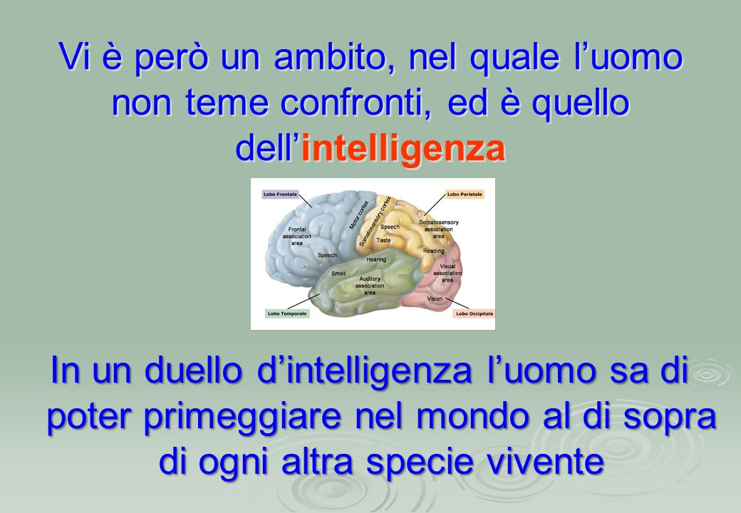 Vi è però un ambito, nel quale l'uomo non teme confronti, ed è quello dell'intelligenza Vi è però un ambito, nel quale l'uomo non teme confronti, ed è quello dell'intelligenza In un duello d'intelligenza l'uomo sa di poter primeggiare nel mondo al di sopra di ogni altra specie vivente