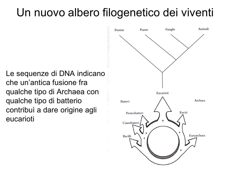 Un nuovo albero filogenetico dei viventi Le sequenze di DNA indicano che un'antica fusione fra qualche tipo di Archaea con qualche tipo di batterio contribuì a dare origine agli eucarioti