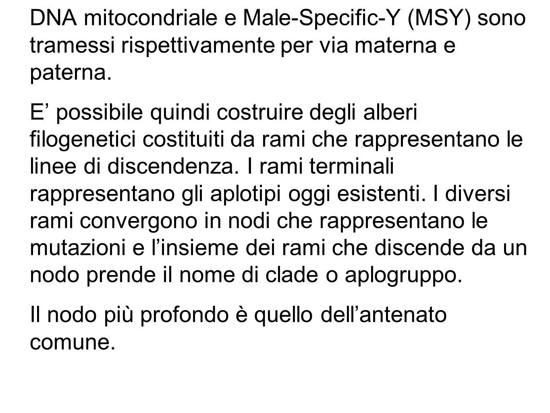 DNA mitocondriale e Male-Specific-Y (MSY) sono tramessi rispettivamente per via materna e paterna.