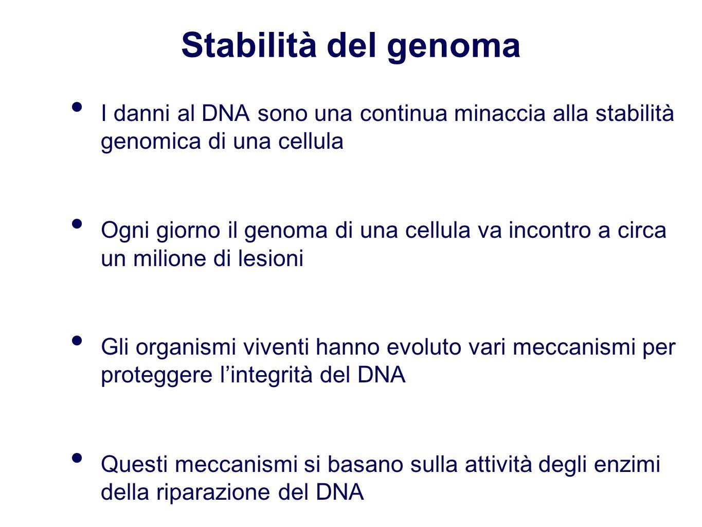 Stabilità del genoma I danni al DNA sono una continua minaccia alla stabilità genomica di una cellula Ogni giorno il genoma di una cellula va incontro a circa un milione di lesioni Gli organismi viventi hanno evoluto vari meccanismi per proteggere l'integrità del DNA Questi meccanismi si basano sulla attività degli enzimi della riparazione del DNA