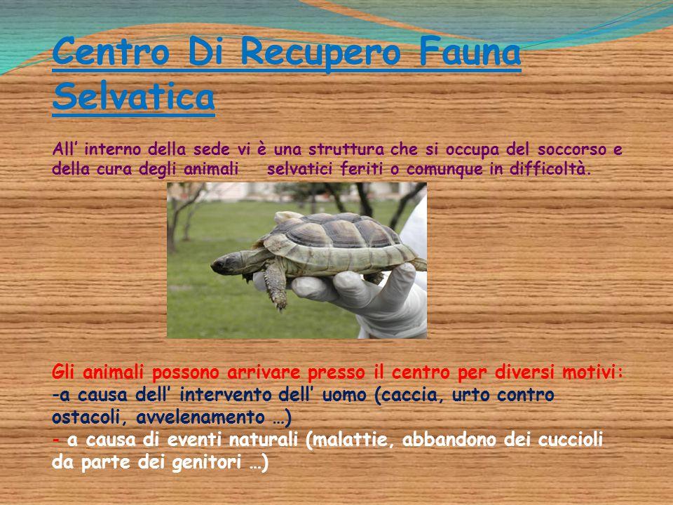 Centro Di Recupero Fauna Selvatica All' interno della sede vi è una struttura che si occupa del soccorso e della cura degli animali selvatici feriti o