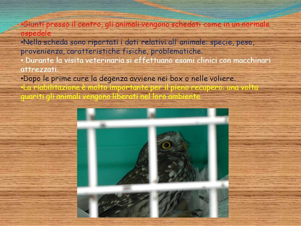 Giunti presso il centro, gli animali vengono schedati come in un normale ospedale Nella scheda sono riportati i dati relativi all' animale: specie, pe