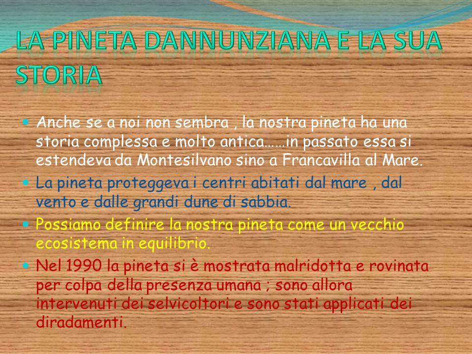 Anche se a noi non sembra, la nostra pineta ha una storia complessa e molto antica……in passato essa si estendeva da Montesilvano sino a Francavilla al