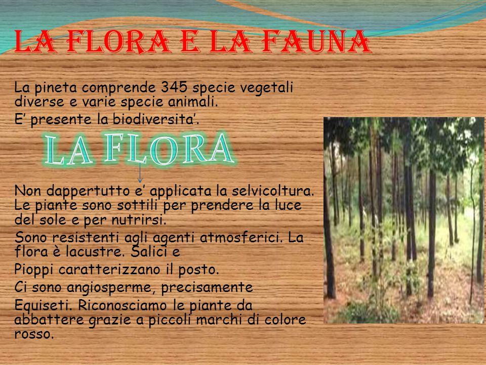 La flora e la fauna La pineta comprende 345 specie vegetali diverse e varie specie animali. E' presente la biodiversita'. Non dappertutto e' applicata