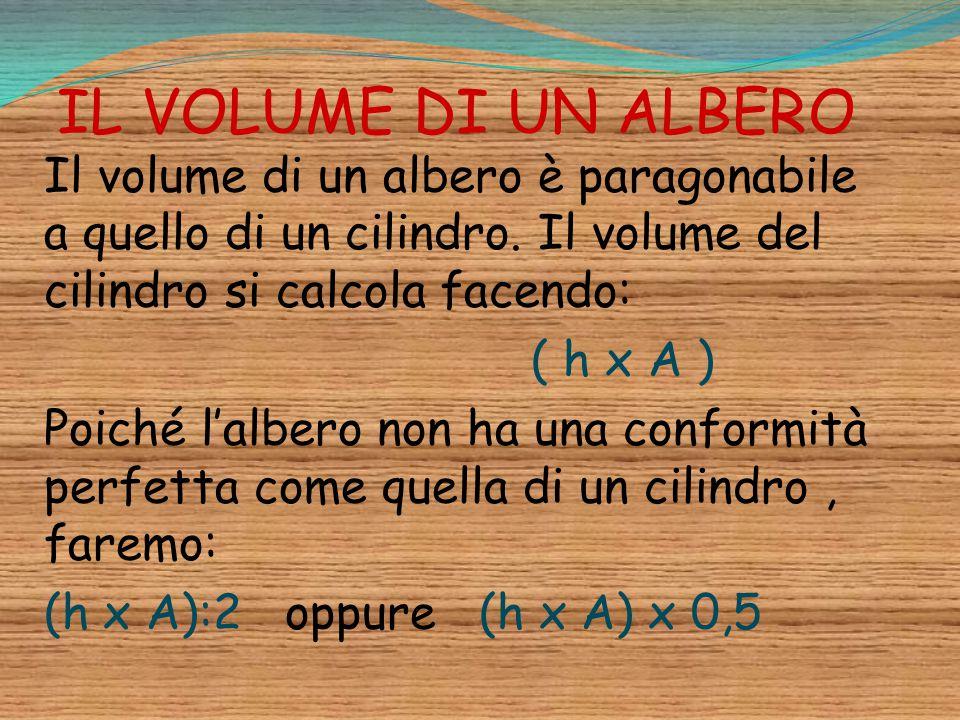 IL VOLUME DI UN ALBERO Il volume di un albero è paragonabile a quello di un cilindro. Il volume del cilindro si calcola facendo: ( h x A ) Poiché l'al